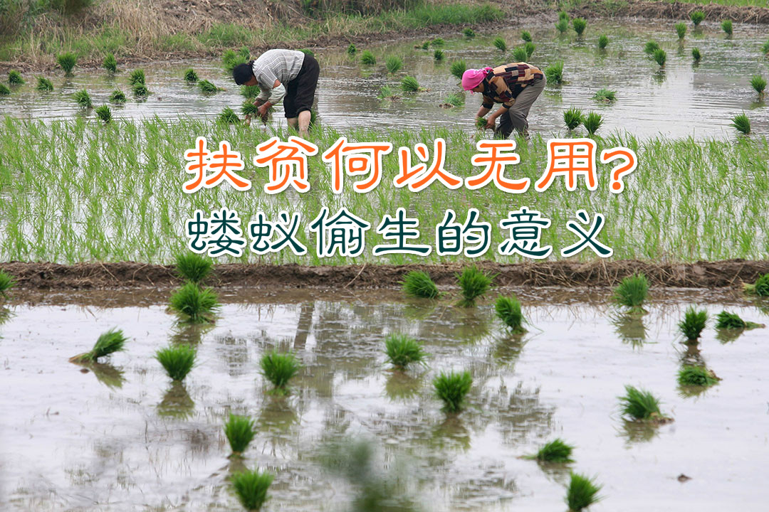 NANJING, CHINA - JUNE 12: (CHINA OUT) Two farmers transplant rice seedlings in a field at the Xiahe Village on June 12, 2007 in the outskirts of Nanjing of Jiangsu Province, China. China's direct subsidy to its hundreds of millions of farmers will rise 63 percent from a year earlier to 42.7 billion yuan (about USUSD5.6 billion) this year, the Ministry of Finance announced late last month. The subsidy includes 15.1 billion yuan earmarked for grain planting and 27.6 billion yuan for farming materials like fertilizers and pesticides. (Photo by China Photos/Getty Images)